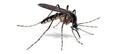 disinfestazione-zanzare-mil-2